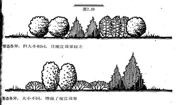 植物黑白画边框