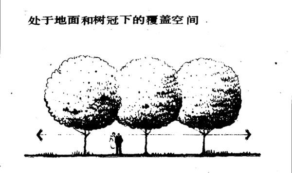 植物配置二-文字资料-三川手绘